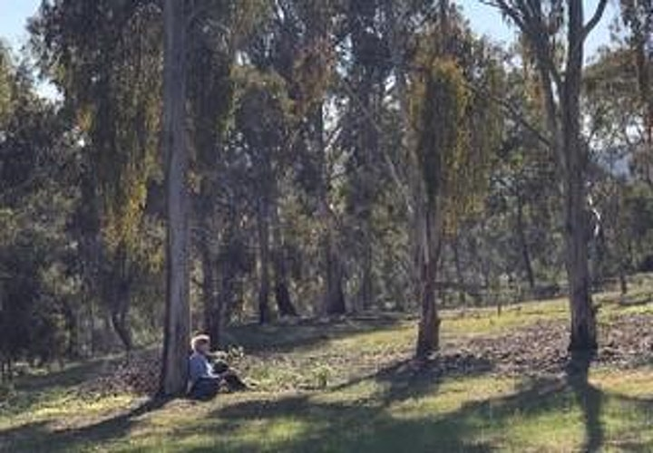 Forest Bathing - Come and Try in Belair National Park image