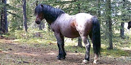 Williams Creek 4.5 hr. Ride (Wild Horse Country) tickets