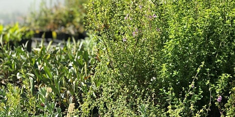 Native Plant Giveaway - Redhead tickets