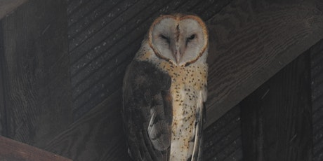 Barn Owl Research tickets