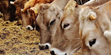 Massentierhaltung und Klima: Essen wir die Welt kaputt? tickets