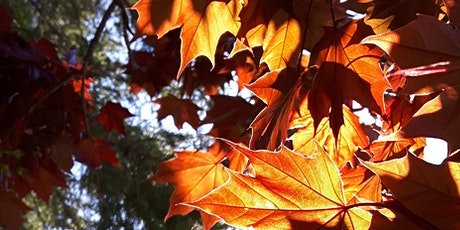 Fall Colours Forest Immersion tickets