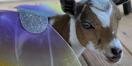 Goat Yoga Halloween Costume Party tickets
