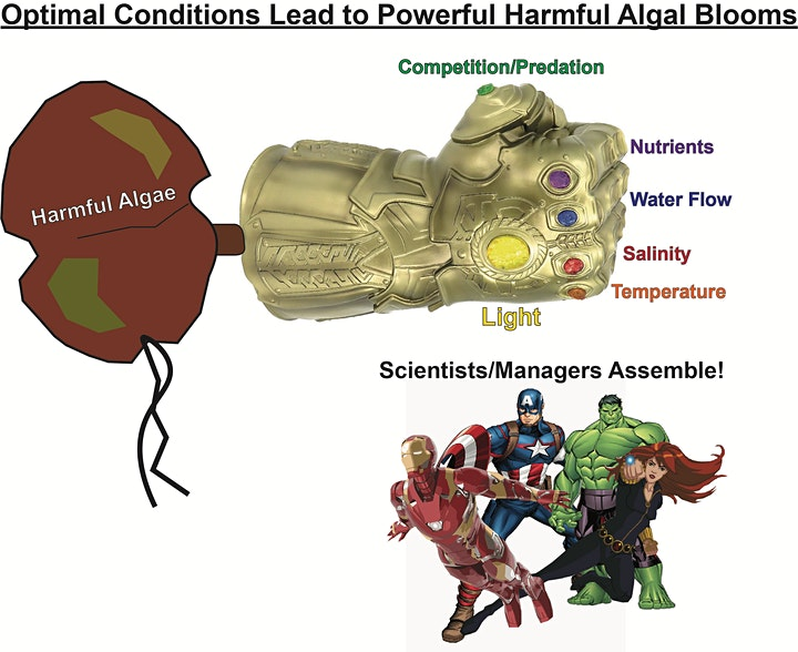 graphic showing algae blooms and avengers