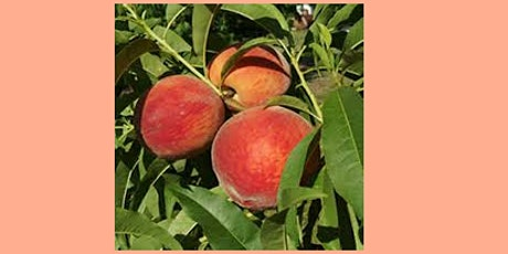 Deciduous Fruit as an Alternative to Citrus - Virtual Presentation