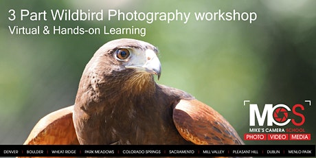 3pt Birds of Prey Photography Workshop with HawkQuest  - Virtual CO tickets