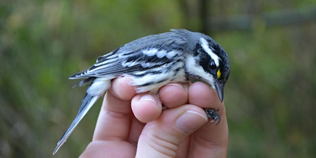 Family Bird Walks and Banding Station Tours tickets