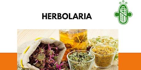 Taller de herbolaria ◙ Medicina ancestral tickets
