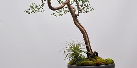 Kusamono workshop and introduction to Bonsai tickets