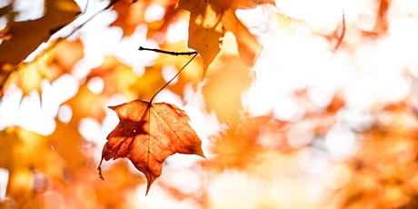 Autumn Equinox Reiki & Meditation tickets