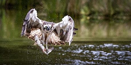 BIF - Fischadler und Eisvögel - Wir kommen! Tickets