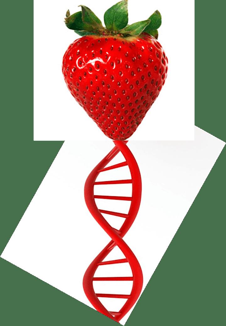 Half-Term #StemClub.  Discovering DNA image