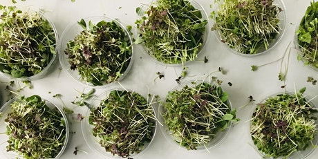 How to Grow Your Own Microgreens tickets