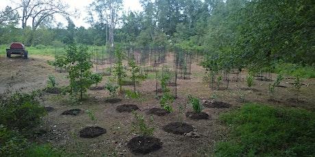 Tree Planting in Neshaminy State Park, PA-100 native trees spring/fall 2021 tickets