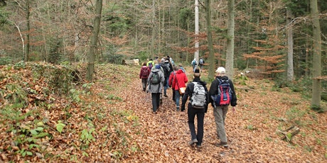 Single-Wanderung Rund um Bad Herrenalb (30+) Tickets