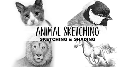 Animal Sketching Art Club| 4 Weeks October | Ages 6+ tickets