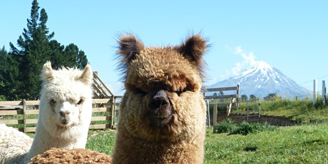 Discover Taranaki: Fresh Herbs, Fluffy Alpacas and A Fabulous Garden tickets