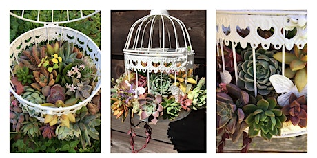 Succulent Bird Cage tickets