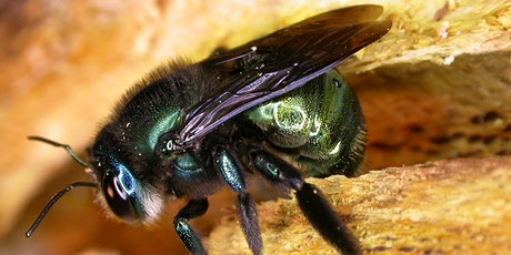 Bee Ecology tickets
