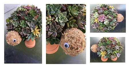 Succulent Turtle Workshop tickets