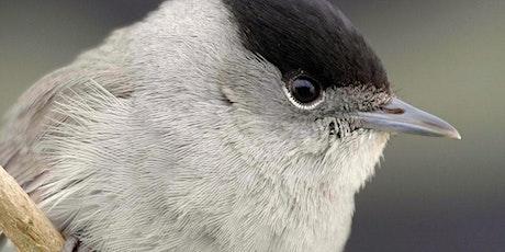 Projection « La fauvette noire » et visite ornithologique billets