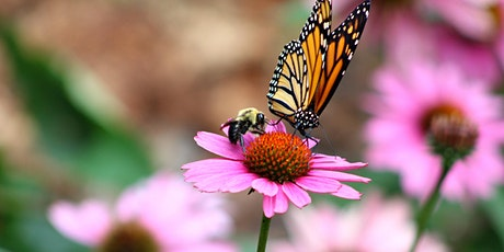Fall Prep for a Pollinator Friendly Garden Webinar tickets