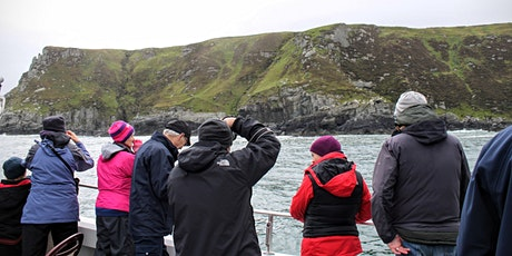 Sea2it - Swell Festival Evening Sightseeing and Wildlife Cruise tickets