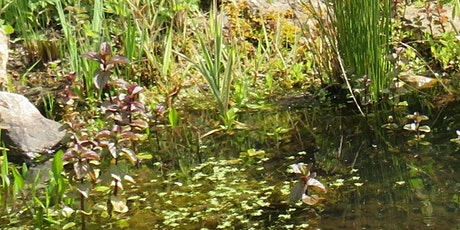 Building and maintaining a garden wildlife pond tickets
