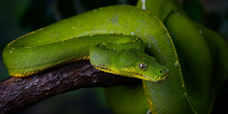 Wild Encounter: Reptiles tickets