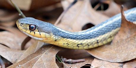Snakes-n-Scales Presents: A Virtual Halloween Animal Adventure!