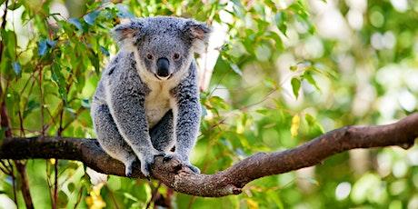 An ADF families event: Walk and talk koala quest, Hunter tickets