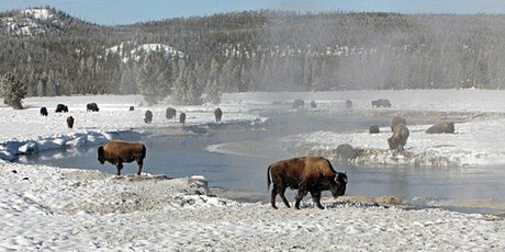 USA – 6 Days Yellowstone Winter Wildlife Adventure