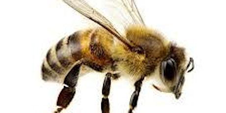 Bee Amazed tickets