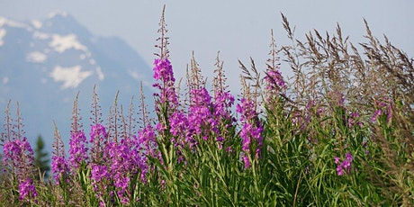 USA – Alaska Summer Fairbanks to Seward tickets