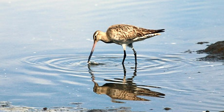 Celebrate the return of the Parramatta River Godwits - Tour 2 tickets
