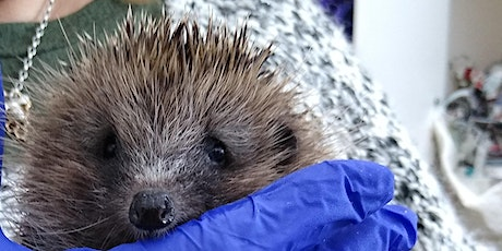 Half term - Make a hedgehog  shaped doorway for your fence. tickets