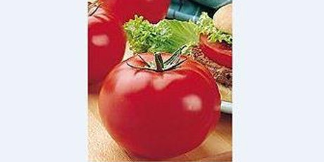 Tomatoes - In Search of the Perfect Tomato - Virtual Presentation