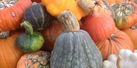 Pick Your Own Pumpkin Patch at Llynclys Hall Farm Shop tickets