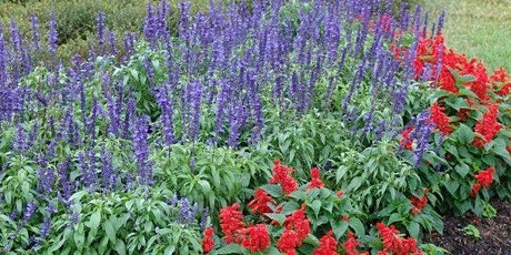 Perennials: Thrive or Dive in Central Florida - Zoom Virtual Class tickets
