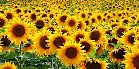 2020 You Pick Sunflower Field tickets