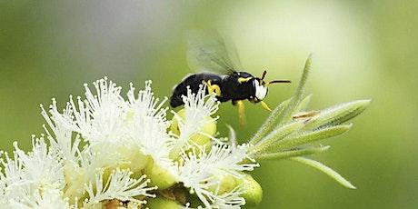 Native Bee Workshops tickets