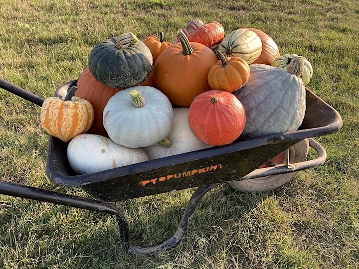 PYO Pumpkins in Hoo image