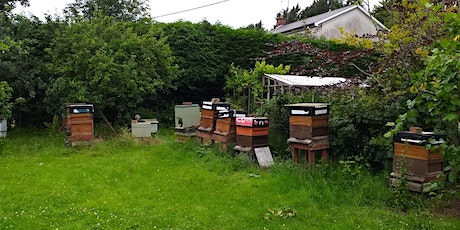 Basics of Bee Keeping at Oxford Island with Charlene Abraham tickets