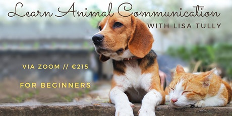 Webinar Animal Communication Level 1 // Lisa Tully tickets
