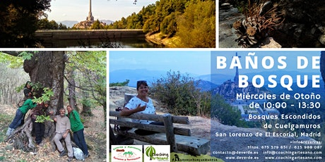 Baño de Bosque mié 14 Oct- Bosques escondidos de Cuelgamuros, SL Escorial entradas