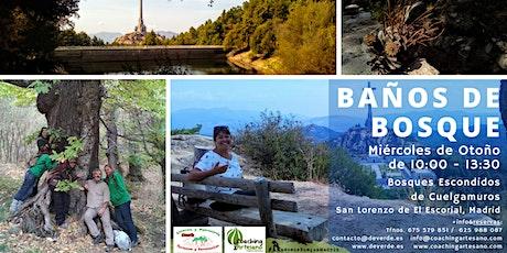 Baño de Bosque mié 4 Nov- Bosques escondidos de Cuelgamuros, SL Escorial entradas
