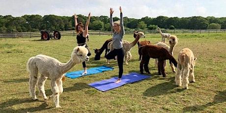 Outdoor Yoga with Alpacas at Nash Hill Farm! tickets