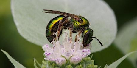 Focus on Pollinators! tickets