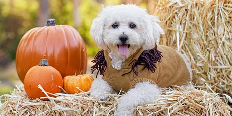 Howl-O-Ween Photos - Mission Bay tickets