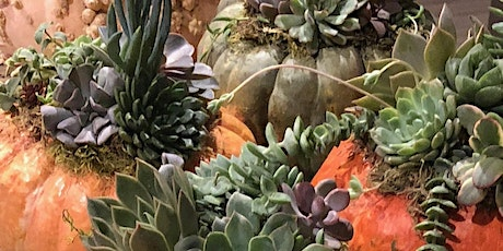 Ten Pin Fun Center Pumpkin Succulent Workshop tickets